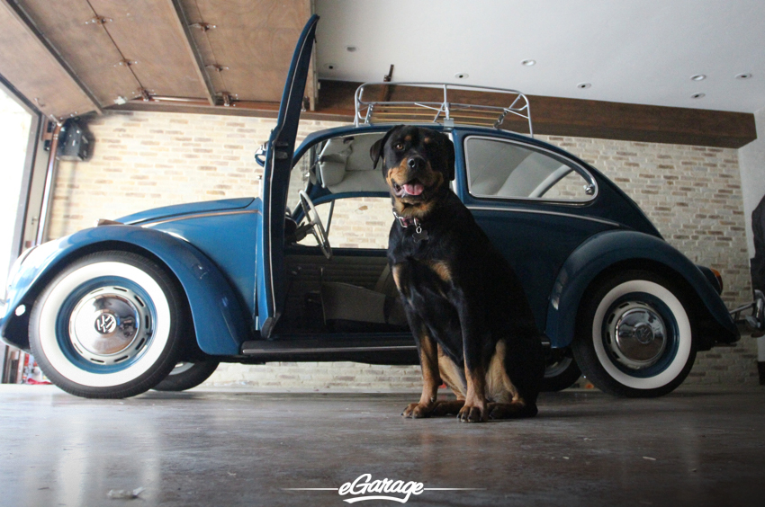VW beetle Beetle Juice   1966 Volkswagen Beetle