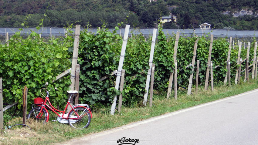 Alpine Adventure bike vineyard