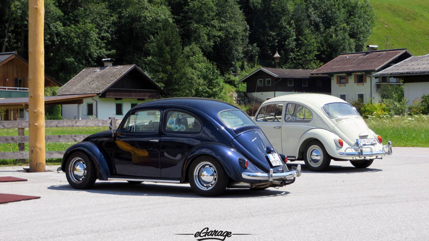 Alpine Adventure Beetles